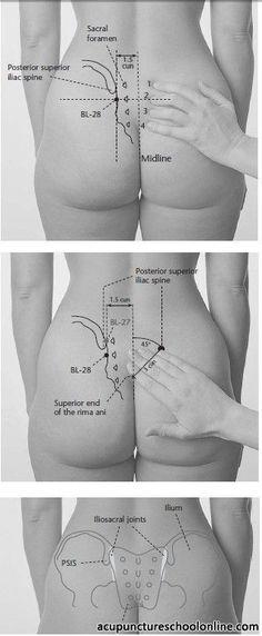 http://acupunctureschoolonline.com/wp-content/uploads/2010/03/BL-28-Bladder-Shu-PANGGUANGSHU-1.jpg