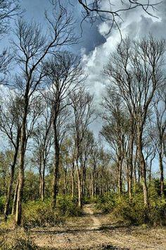 Randublatung forest