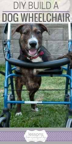 Pvc dog wheelchair information pinterest dog wheelchair dog how to build a diy dog wheelchair do it yourself dog wheelchair solutioingenieria Choice Image