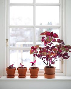 Need Advice On Indoor Gardening? Read On Have you ever wanted to have an indoor garden, but just do not know how to start?