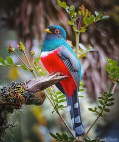 Cute Birds, Pretty Birds, Beautiful Birds, Bird Watching, Bird Feathers, Wildlife Photography, South America, Animal Pictures, Parrot