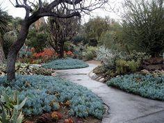 gorgeous succulent garden. southern ca.