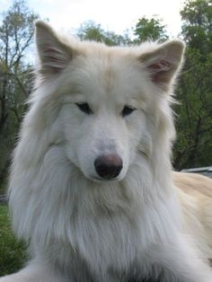 Native American Indian Dog...very very ... | Pets, loved and lost