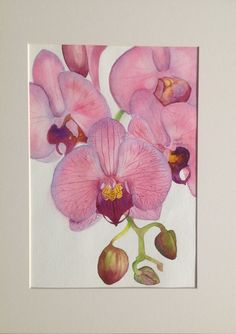 Orchid. Watercolour.