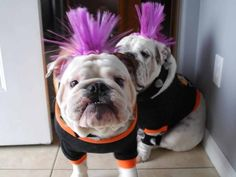 omg!  9/29/201 Trooper and Bullet The Bulldogs