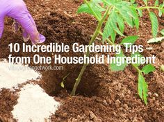 10 Incredible Gardening Tips – from One Household Ingredient
