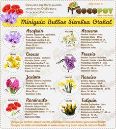 Descubre las Flores Bulbosas de Siembra otoñal con COCOPOT! puedes comprarlas en nuestra tienda online.