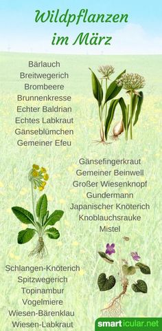 Die Natur erwacht und jeden Tag finden wir neue Wildpflanzen. Finde heraus, welche Kräuter, Bäume und Sträucher deinen Tisch im März bereichern können.