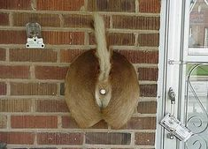 Deer Butt Doorbell, for people who NEVER want visitors...ever