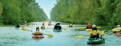 In early spring, hundreds of kayakers and canoeist from across the East Coast launch their vessels into the Dismal Swamp Canal's cool, calm waters.  The historic waterway serves as the backdrop for Paddle for the Border, an annual 7.5-mile excursion to the Virginia/North Carolina border.