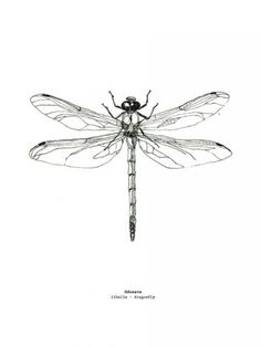 Dragonfly Drawing, Dragonfly Tattoo Design, Dragonfly Art, Tattoo Designs, Dainty Tattoos, Small Tattoos, Heart Tattoos, Garter Tattoos, Rosary Tattoos