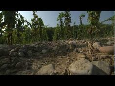 Discover The Wines of Northern Italy