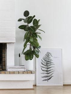 Plants | The Lifestyle Edit