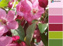 inspirational color palette in pinks and greens