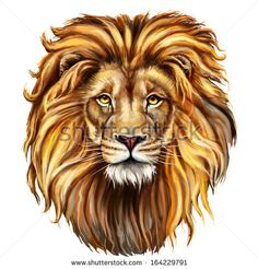 lion head digital painting/ lion head in front - stock photo