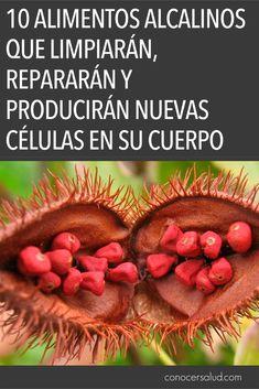 10 alimentos alcalinos que limpiarán repararán y producirán nuevas células en su cuerpo #salud