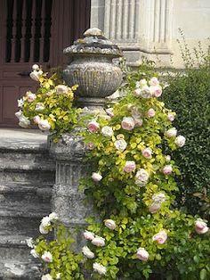 Climbing Roses - So Beautiful! inspiration for entrance to pink rose garden Beautiful Gardens, Beautiful Flowers, Garden Pictures, Garden Pots, Garden Ideas, Climbing Roses, White Gardens, My Secret Garden, Parcs