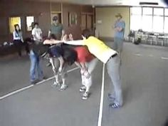 Trust V - Duct Tape Teambuilding Game - YouTube