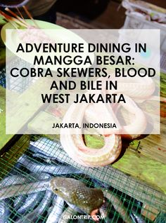 The most adventurous dining experience in West Jakarta, Indonesia. If you are a true adventurous foodie, why not eating snake satay and drink its blood and bile? Check my article for more stories! Thai Cooking, Unique Restaurants, Best Street Food, Food Stall, Weird Food, Fish Dishes, Skewers, Foodie Travel, Jakarta