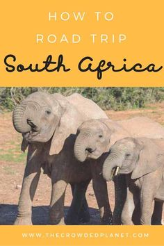 All you need to know to plan a South Africa Road Trip - how to rent a car in South Africa, South Africa driving tips, where to go, what to see and where to stay in South Africa, plus a full 1 month itinerary!