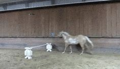 10 Horses Who Forgot How to Horse - Horses Funny - Funny Horse Meme - - Chill no horses or humans were harmed in the making of these gifs. The post 10 Horses Who Forgot How to Horse appeared first on Gag Dad. Horse Meme, Funny Horses, Horse Quotes, Cute Horses, Pretty Horses, Beautiful Horses, Big Horses, Animal Fails, Animal Memes