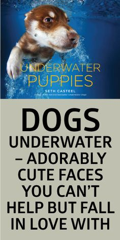 Dogs Underwater - Adorably Cute Faces You Can't Help But Fall In Love With! <3