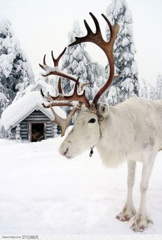 10+ Reasons Why Lapland Is The Most Magical Place To Ce… na Stylowi.pl