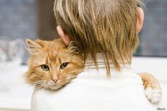 11 razões pelas quais sua obsessão com gatos te faz mais feliz e mais saudável