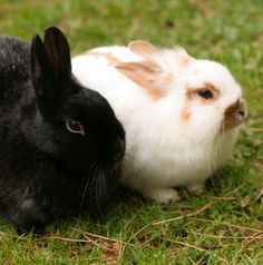Understanding Rabbits' Territorial Markings - Small Pets Pet Care Corner - PetSolutions