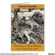Wish a Merry Christmas to loved ones this holiday season with Christmas cards from Zazzle! Festive greeting cards, photo cards & more. Christmas Cards, Merry Christmas, New Year Card, Photo Cards, Kangaroo, First Love, Wildlife, Seasons, Grey