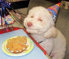 this cake is sooooo goood maaaaan....