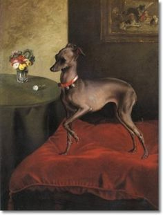 Grey Italian Greyhound On Red Cushion 1870