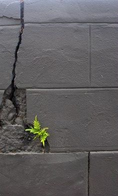 Fern growing in a concrete block wall Concrete Block Walls, Lilies Of The Field, Dame Nature, Bloom Where Youre Planted, Wall Writing, Parcs, Wabi Sabi, Amazing Nature, Wild Flowers