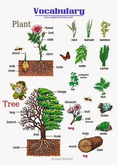 English vocabulary: Plants and Trees … English Resources, English Tips, English Activities, English Fun, English Study, English Words, English Lessons, English Grammar, Learn English