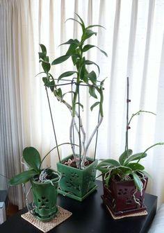 Schöne Dekoideen Orchidee Pflege Tipps