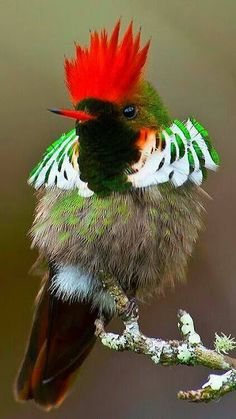 Kinds Of Birds, All Birds, Little Birds, Love Birds, Pretty Birds, Beautiful Birds, Animals Beautiful, Exotic Birds, Colorful Birds