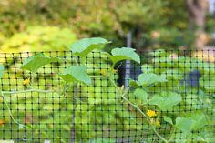Squirrel Gardening And Rabbit On Pinterest