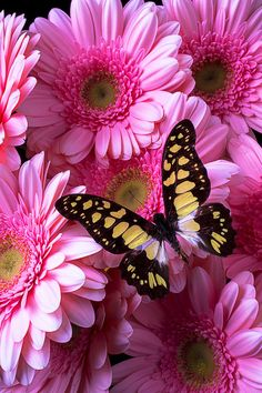 Yellow Black Butterfly Photograph