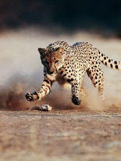 Imágenes espectaculares de National Geographic Animales