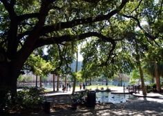 Lake Eola is right around the corner. Hop in your new Toyota and head over to watch the fountain rise and fall, or enjoy the breeze between the trees!