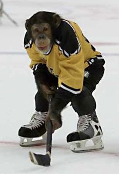 Animals Playing Sports Adorable Animals Playing Sports In 2020 Hockey Pictures Ice Hockey Hockey