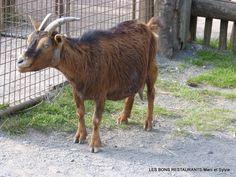 Rhodes(57)-Parc animalier de Sainte-Croix!