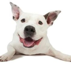 In #Oakland this weekend? Check out #BadRap and meet Ken Foster, author of I'M A GOOD DOG  #dogs #puppies #pitbulls