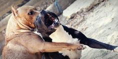 petition: STOP DOGFIGHTING