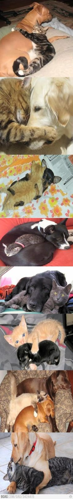 Cats and dogs can be friends. Especially if you raise them together.