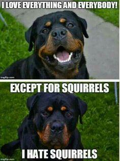 Dang Squirrels