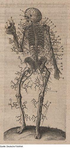 nervous system, from Biologie & Anatomie & Mensch, by Robert Fludd, 1623