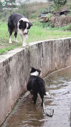 Dog exciting photo is part of Cute animals - Dog exciting photo Funny Animal Videos, Cute Funny Animals, Cute Baby Animals, Funny Cute, Funny Dogs, Animals And Pets, Super Funny, Funny Humor, Cute Puppies