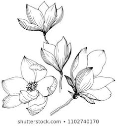 Similar Images, Stock Photos & Vectors of Magnolia in a vector style isolated. Full name of the plant: magnolia. Vector flower for background, texture, wrapper pattern, frame or border. Easy Flower Drawings, Flower Sketches, Easy Drawings, Art Sketches, Art Floral, Floral Drawing, Magnolia Tattoo, Vector Flowers, Magnolia Flower