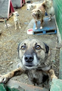 STOP Turkey's dog massacre law! Please sign and share